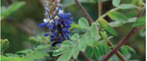 Plantas medicinales para síntomas gripales