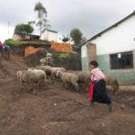 Medio Ambiente Chimborazo