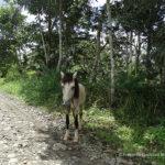 Medio Ambiente Kichwa Orellana